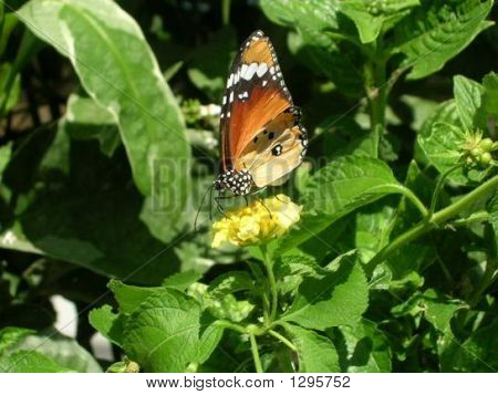 Brown Butterfly Yellow Flower