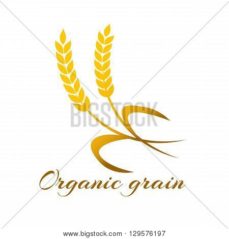 Wheat ear symbols for logo design. Agriculture grain, organic plant, bread food, natural harvest, vector illustration.