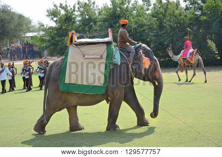JAIPUR INDIA - NOVEMBER 13 2015: Elephant Polo at Dera Amer Elephant Safari. The camp is run by a local family and operates out of their ancestral home.