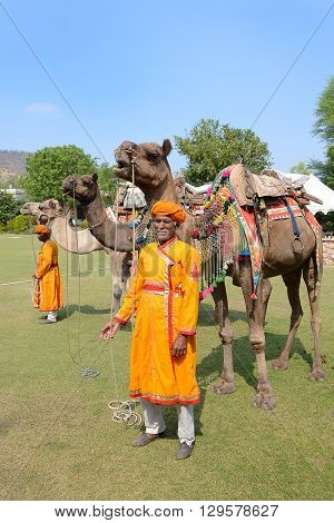 JAIPUR INDIA - NOVEMBER 13 2015: Camels at Dera Amer Elephant Safari. Elephants and Camels compete in polo matches at the tourist camp.