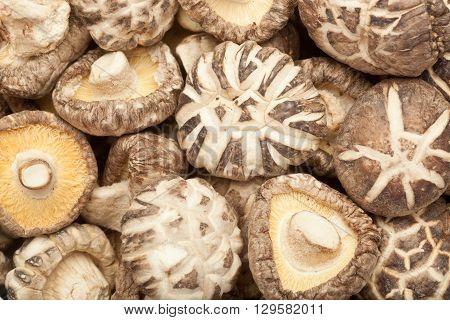 Closeup of lots of dried shitake mushrooms