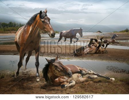 herd of horses resting on a sandbank in the river on a background of mountains
