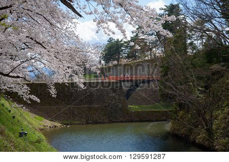 FUKUSHIMA JAPAN - APR 152016:Tsuruga Castle surrounded by hundreds of sakura trees