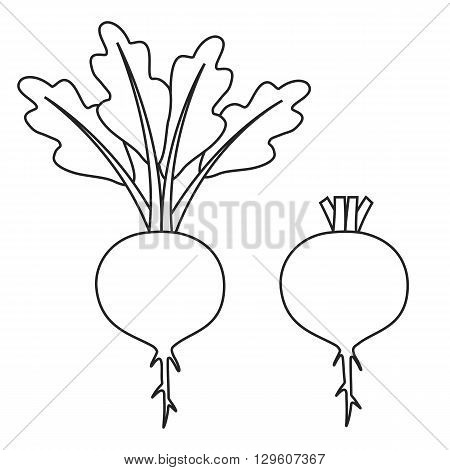 Line icon beet with leaves and beet without leaves. Vector illustration.