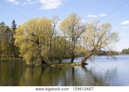 shot of linden tree on a tiny island