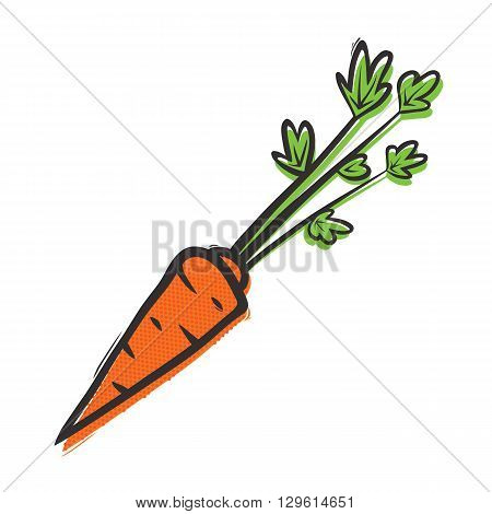 Organic carrot isolated vector illustration in popart style