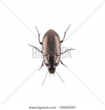 Brown bug isolated on a white background