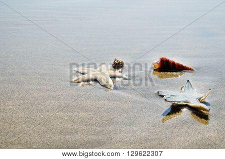 live starfish, sea life concept. Stock image.