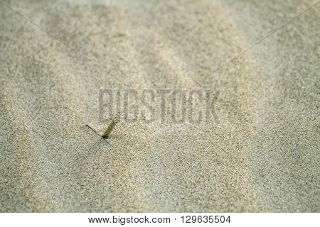 A Stick In The Sand