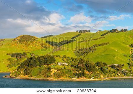 Rural Scene and Sheep Farm near Dunedin at Otago Region Southern island New Zealand