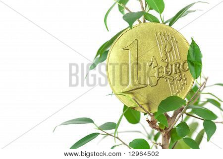 Ficus  And One Euro Coin Isolated On White