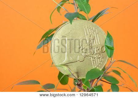 Ficus  And One Euro Coin On A Orange  Background