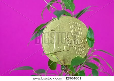 Ficus  And One Euro Coin On A Purple  Background