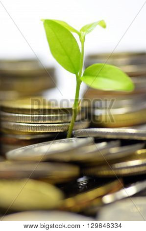 Plant and lot of coins isolated on white background. Money concept