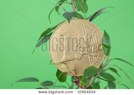 Ficus  And One Euro Coin On A Green  Background