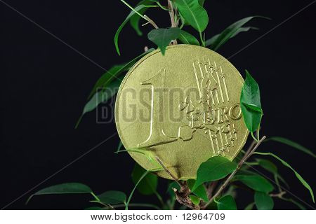 Ficus  And One Euro Coin On A Black  Background