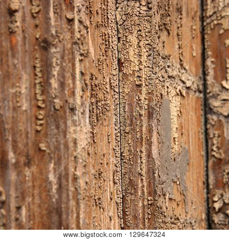 Wooden texture warm colors closeup macro view. Wood corrosion pattern