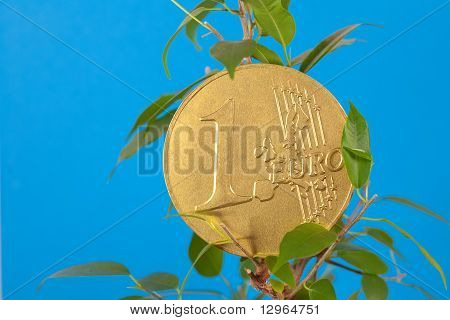 Ficus  And One Euro Coin On A Blue  Background