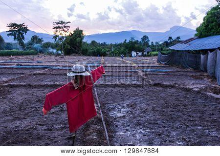 scarecrow in asia farm , Thailand Asia