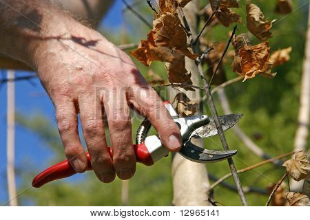 Time To Prune