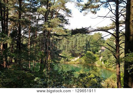 Beautiful landscape scenery of calm water in a trnquil forest lagoon