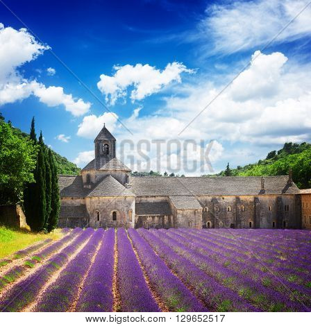 world famous Abbey Senanque and blooming  Lavender field under blue sky, France,  retro toned