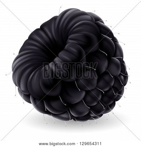 Shiny blackberry isolated on white background. Realistic llustration