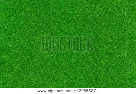 A fresh green lawn texture background with copy space