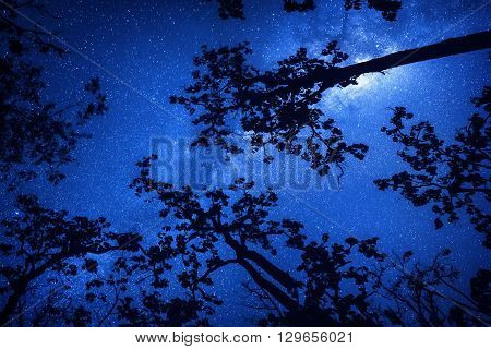 Milkyway and blue sky with forest tree foreground (This frame maybe noise in sky because take photo in night sky)