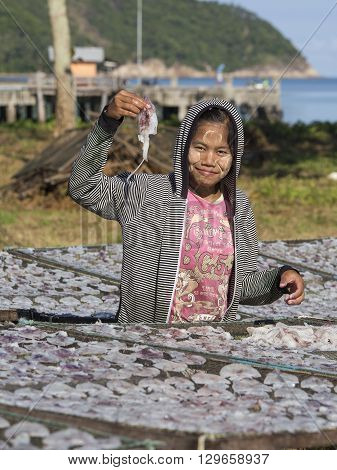 KOH PHANGAN THAILAND - NOVEMBER 16 2015 : Unknown Burmese woman lays squid drying in the fishing village. Fishing is main occupation and income source on the island