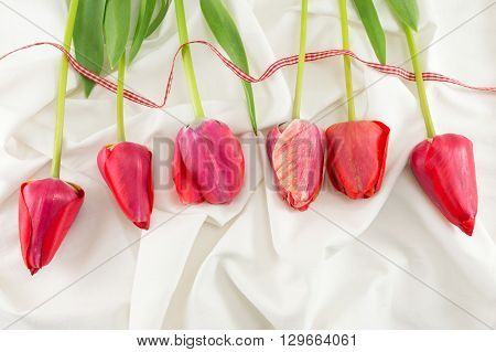 Red Tulips On A Silky Fabric