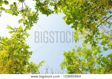 Spring trees and blue sky background. Nature background.