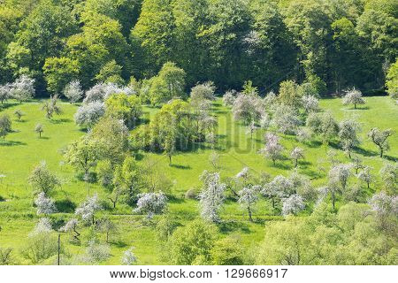 idyllic spring time scenery showing a district named Hohenlohe including blooming apple trees in Southern Germany