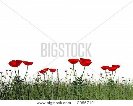 Poppies isolated in white background - 3D render