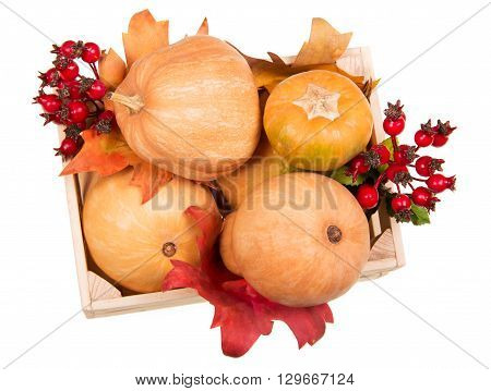 Pumpkins in a box, hips and autumn leaves isolated on white background