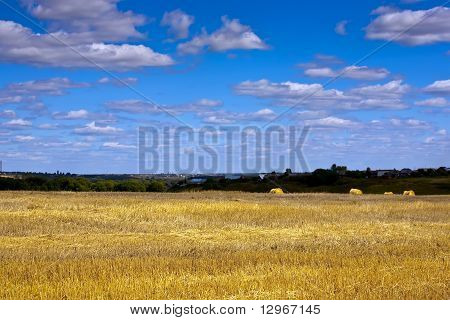 Summer Landscape With Field