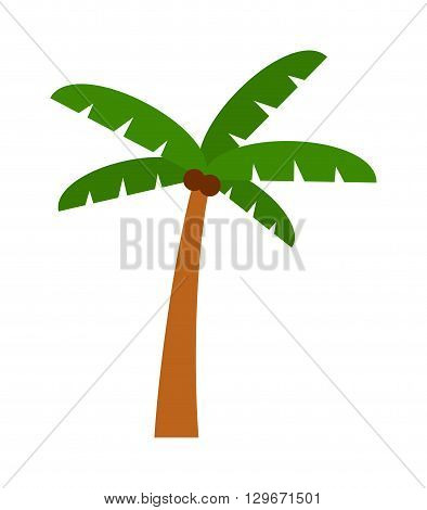 Green coconut palm isolated leaf on white background. Palm isolated vector and green palm isolated. Palm isolated green plant nature and tropical palm isolated. Botany coconut stem growth tree.
