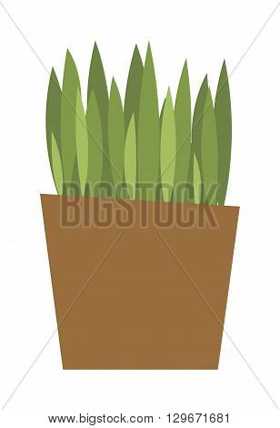 Flat flower pot and grass pot with colorful grass . Nature green grass pot and spring decoration pot. Flower Pot garden bloom season flat vector. Spring colorful grass flowers in pot vector.