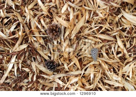 Pine Strippings Background