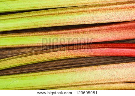 rhubarb close up on the wooden background