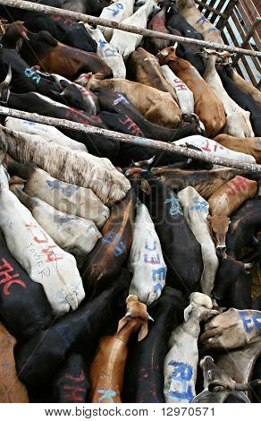 Tightly Packed Cattle