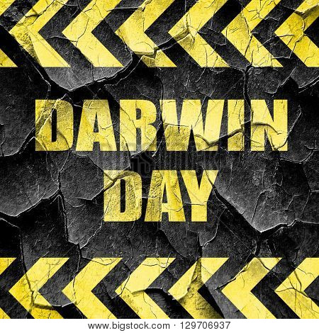 darwin day, black and yellow rough hazard stripes