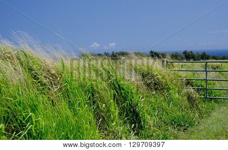 Gates To A Grass Field Along Highway 270 Near Keokea Beach