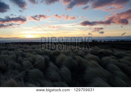 Sunset Over Fountain Grass Field Next To Waikoloa Road