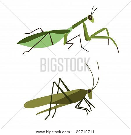 Insects vector set. Vector Mantis and vector grasshopper isolated on white background. Mantis and Grasshopper in flat style. Insect cartoon set. Grasshopper isolated. Insect cartoon set.