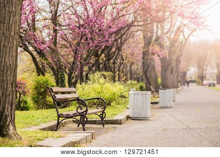 Park lane with beautiful putple trees and benches