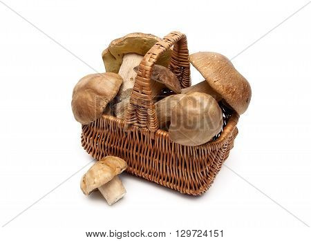 wild mushrooms in a wicker basket on a white background. horizontal photo.