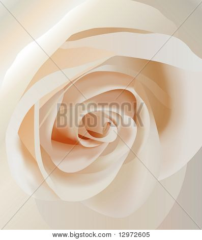 vector white rose closeup