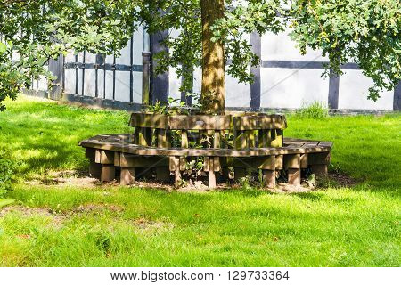 Old nice round wooden bench with a tree in the middle