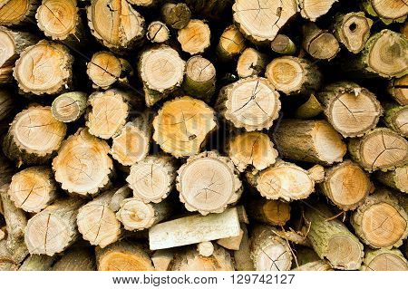 Pile of log wood background. Log wood texture.